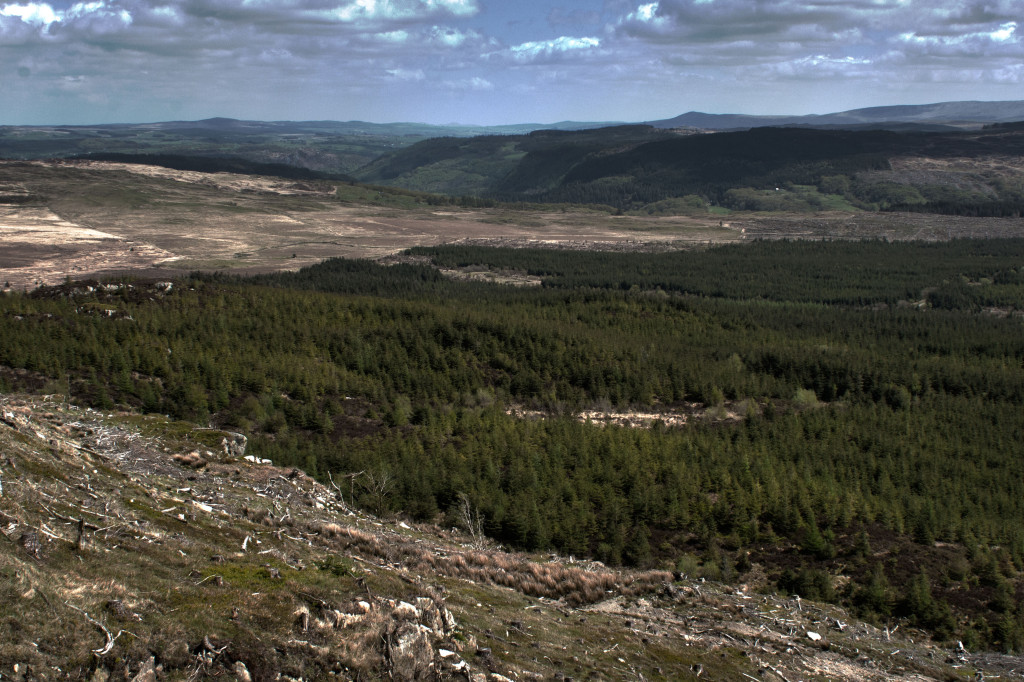 A view over the forest near Dolwyddelan, Snowdonia