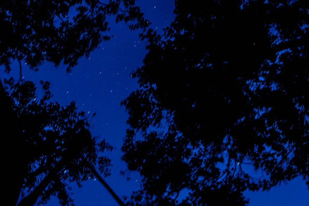 Falling asleep under the trees and the stars